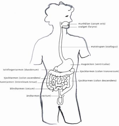 Magen – vi är vad vi absorberar!