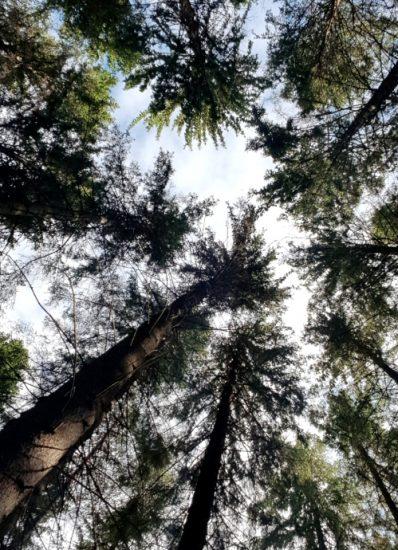 Att skogsbada